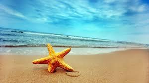LJETO ( doba kad je na plaži više čikova nego kamenčića)