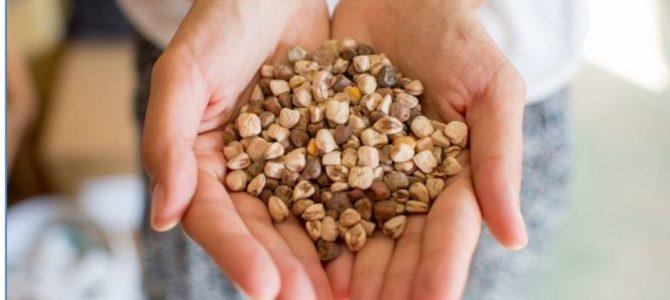 """Radionica """"Kućno sjemenarstvo"""" i razmjena sjemenja u Rijeci"""
