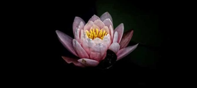 Rumi – 7 moćnih savjeta koji će vas totalno oduševiti