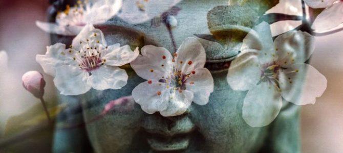 Živi mirno. Cvjetovi će sami procvjetati