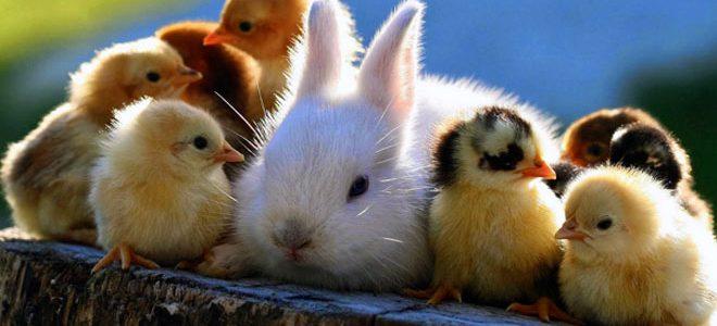 Rad sa životinjama, Otok Krk, thetahealing tečaj ®